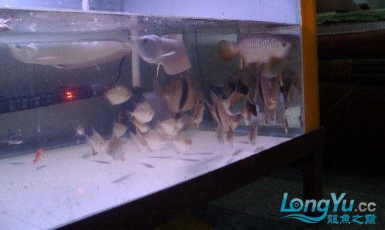 我喜欢的混养还带有一小缸马尾斗鱼的小别野哦 西安龙鱼论坛 西安博特第4张