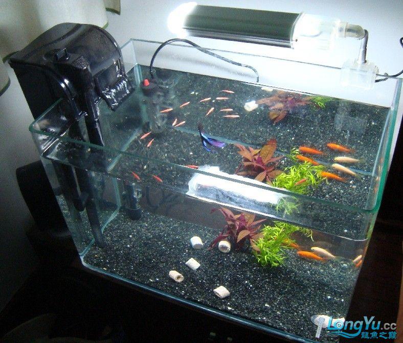 我喜欢的混养还带有一小缸马尾斗鱼的小别野哦 西安龙鱼论坛 西安博特第7张