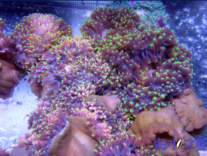 这样的珊瑚必须上首页