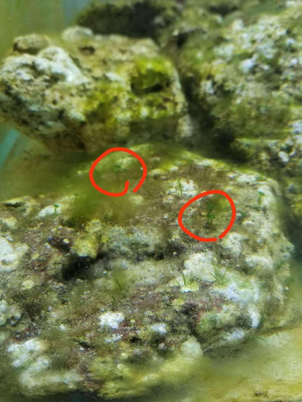 爆藻期间出现的绿色植物 西安龙鱼论坛