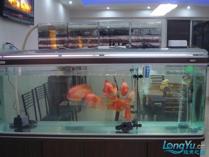 2米缸9金刚+1宝石混养 西安观赏鱼信息 西安博特第3张