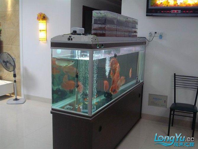 2米缸9金刚+1宝石混养 西安观赏鱼信息 西安博特第2张