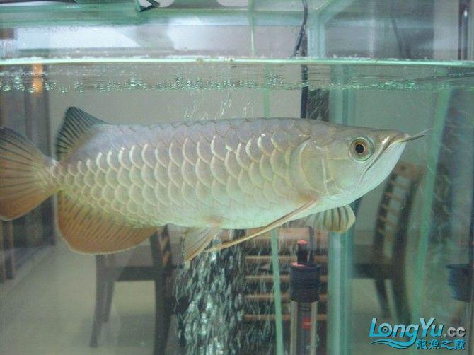 2米缸9金刚+1宝石混养 西安观赏鱼信息 西安博特第6张
