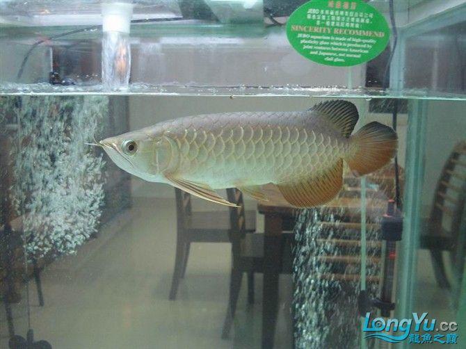 2米缸9金刚+1宝石混养 西安观赏鱼信息 西安博特第8张