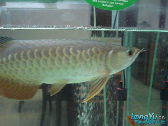 2米缸9金刚+1宝石混养 西安观赏鱼信息 西安博特第7张