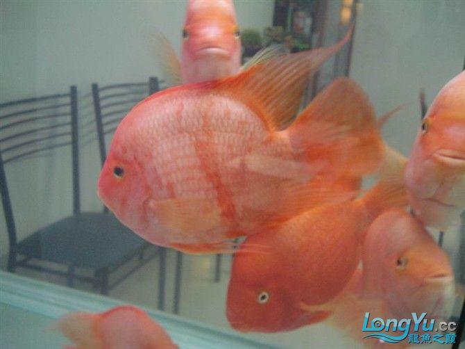 2米缸9金刚+1宝石混养 西安观赏鱼信息 西安博特第9张