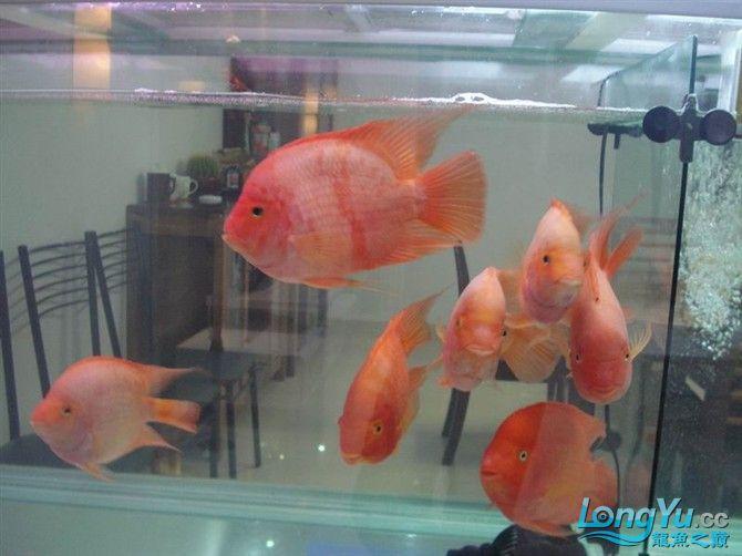 2米缸9金刚+1宝石混养 西安观赏鱼信息 西安博特第11张