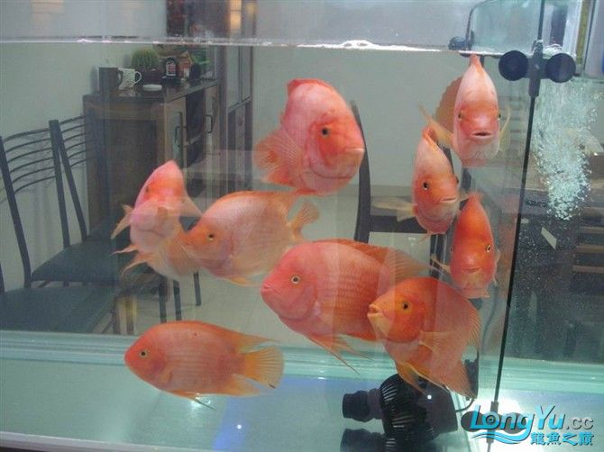 2米缸9金刚+1宝石混养 西安观赏鱼信息 西安博特第10张