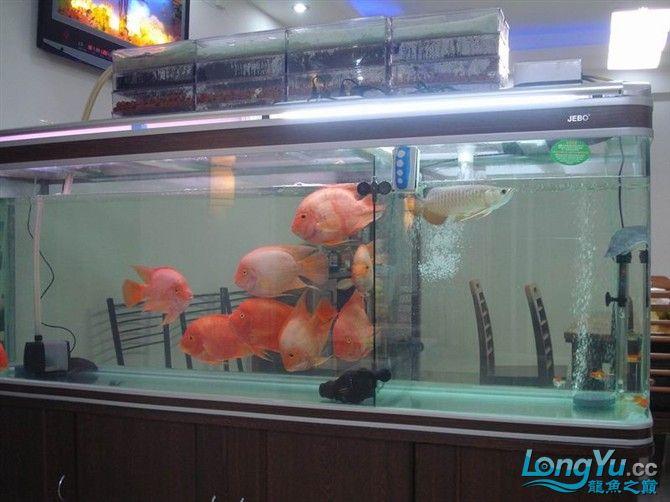 2米缸9金刚+1宝石混养 西安观赏鱼信息 西安博特第13张
