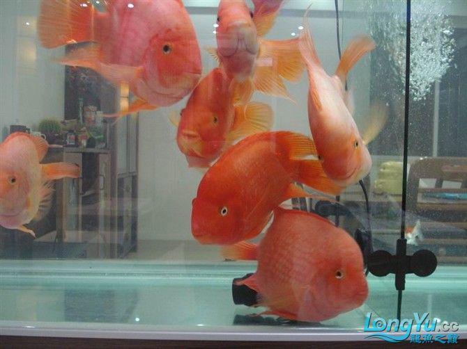 2米缸9金刚+1宝石混养 西安观赏鱼信息 西安博特第12张
