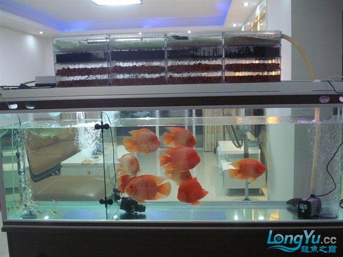 2米缸9金刚+1宝石混养 西安观赏鱼信息 西安博特第14张