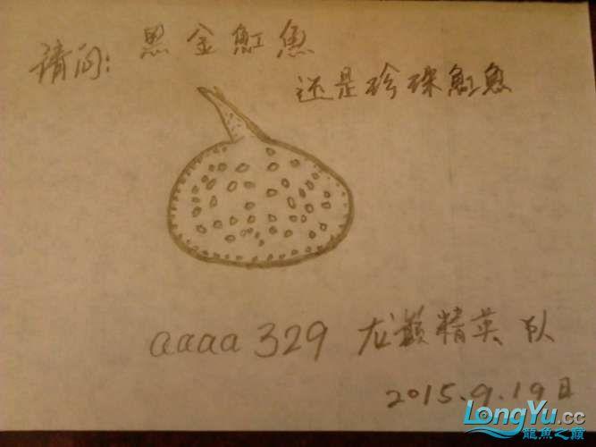 【龙巅精英】黑金还是珍珠 西安观赏鱼信息 西安博特第1张