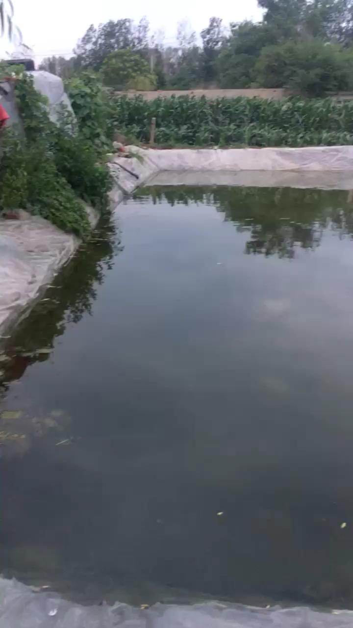 我家的鱼塘龙鱼 西安龙鱼论坛