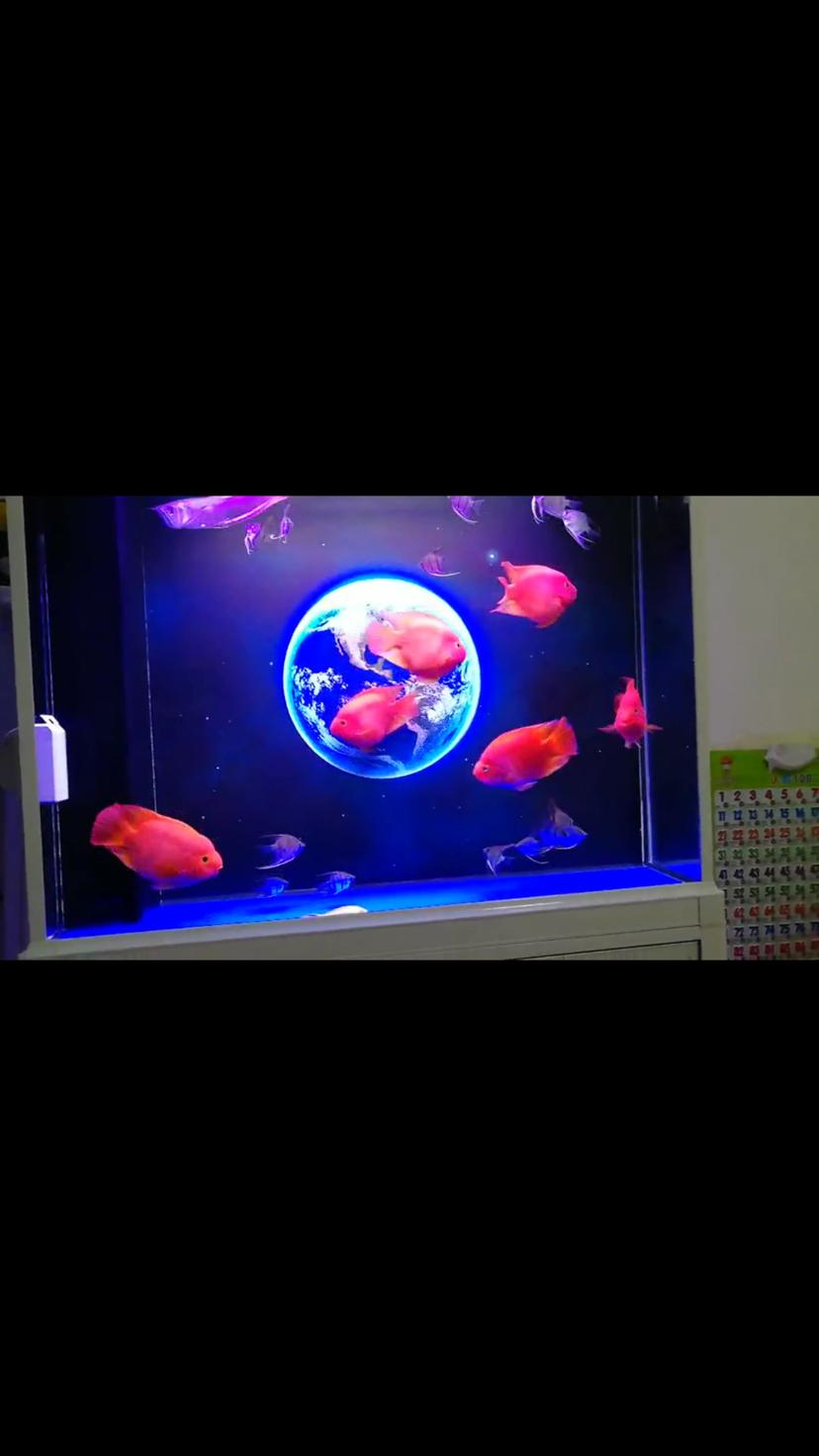 养鱼养水用AC支持支持 西安龙鱼论坛 西安博特第1张