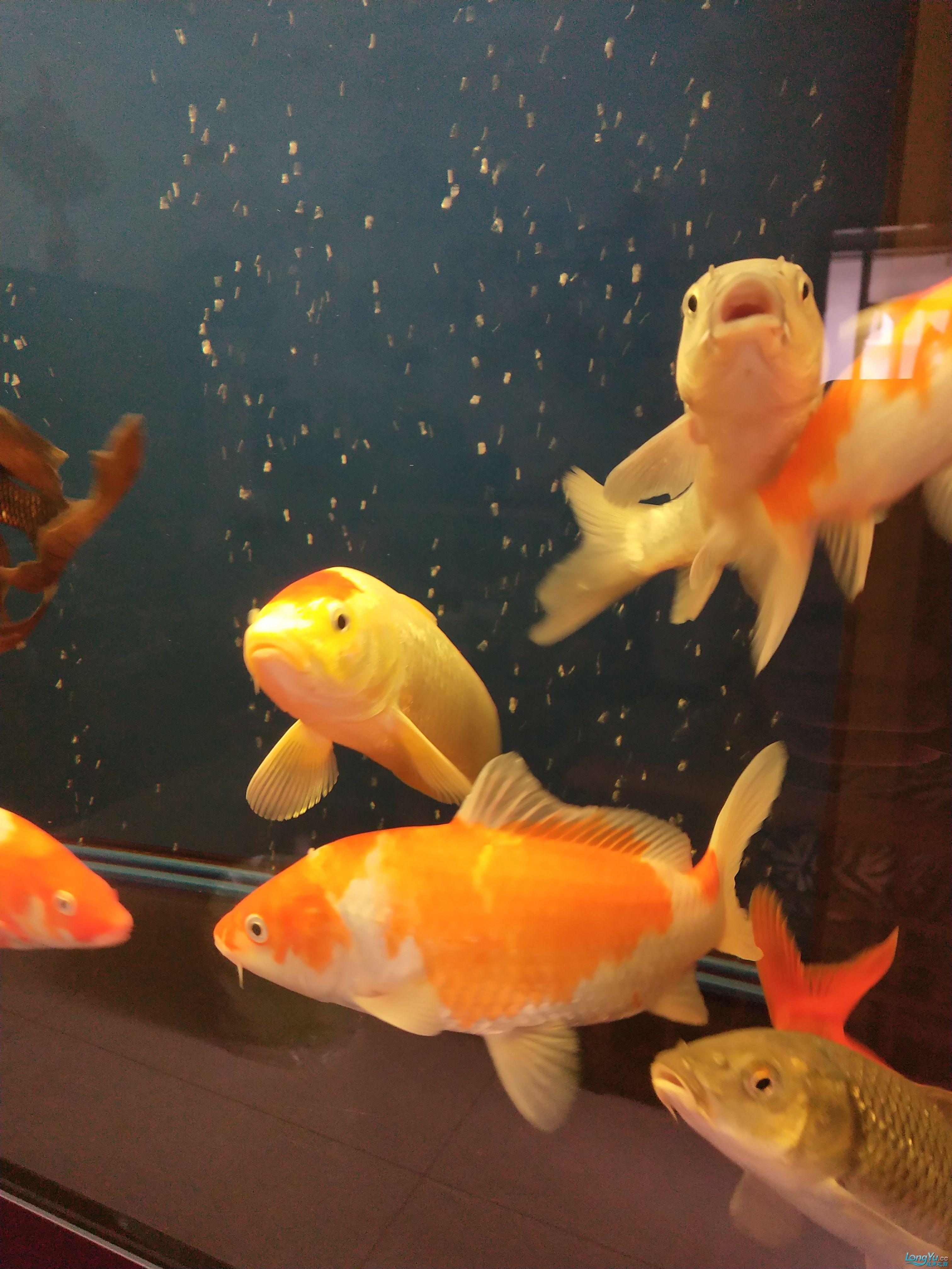 治疗第三天这个也晒晒 西安观赏鱼信息 西安博特第3张