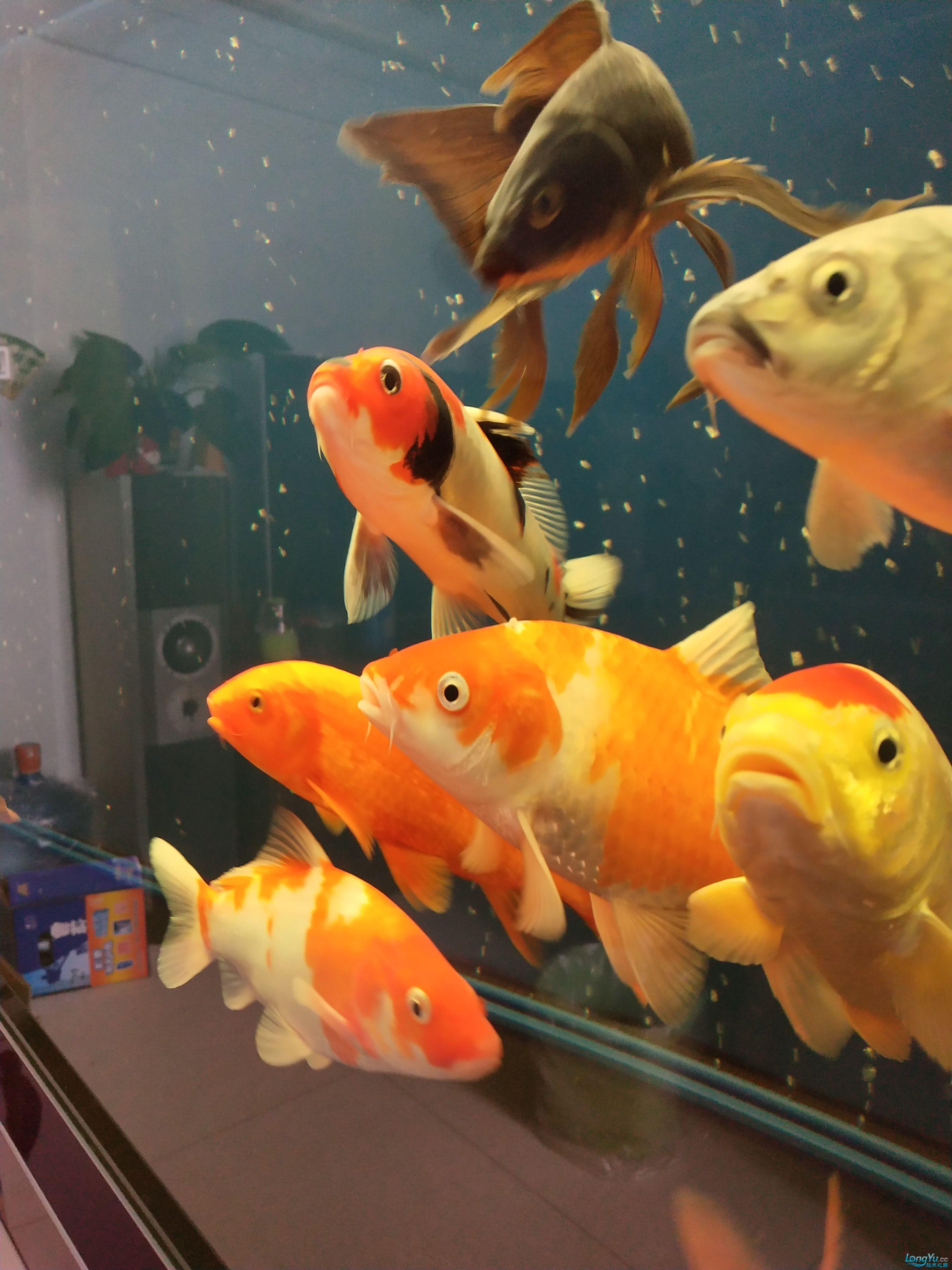 治疗第三天这个也晒晒 西安观赏鱼信息 西安博特第4张