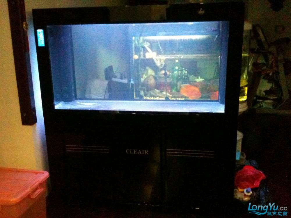 新订做的可丽爱到家补个小高入新缸照 西安观赏鱼信息 西安博特第1张