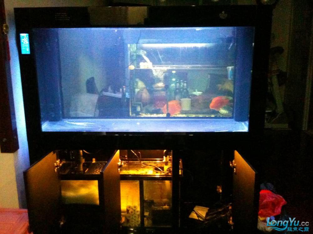新订做的可丽爱到家补个小高入新缸照 西安观赏鱼信息 西安博特第2张