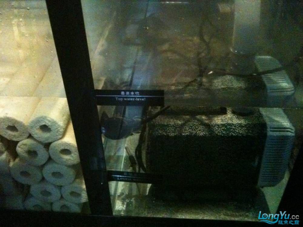 新订做的可丽爱到家补个小高入新缸照 西安观赏鱼信息 西安博特第6张