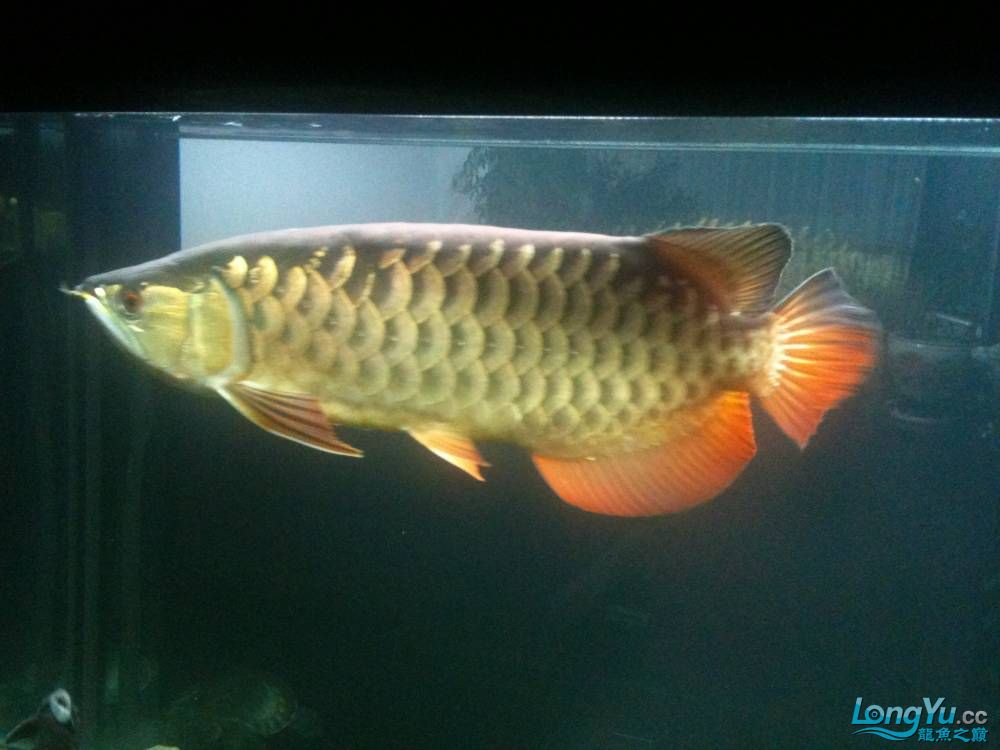 新订做的可丽爱到家补个小高入新缸照 西安观赏鱼信息 西安博特第8张