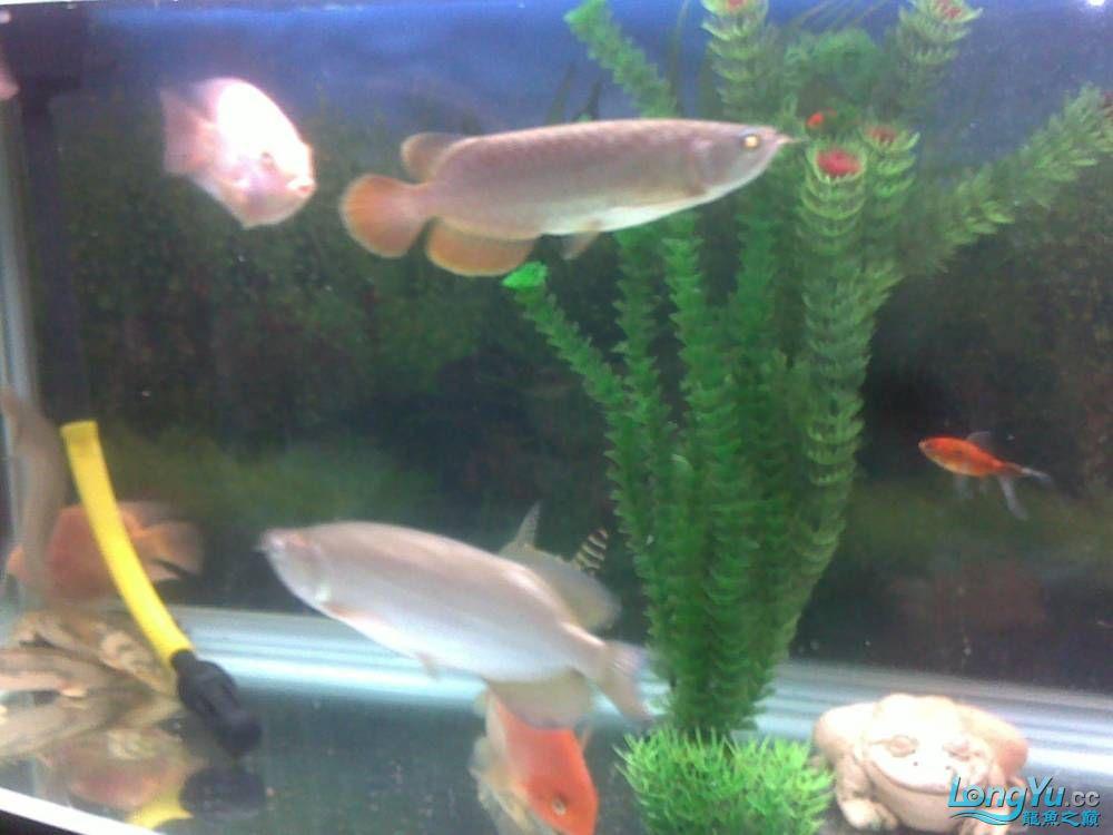 小学混养珍珠号半 西安观赏鱼信息 西安博特第4张