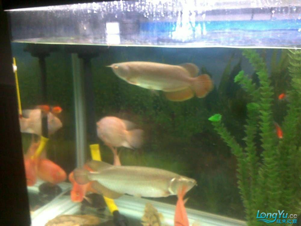 小学混养珍珠号半 西安观赏鱼信息 西安博特第21张