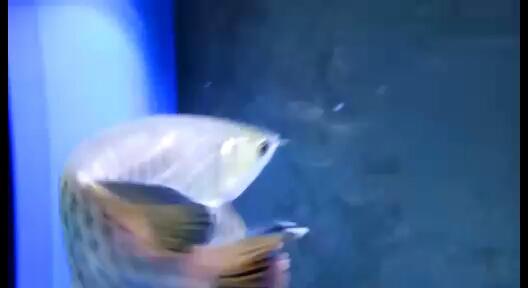 龙跳缸了咋解决处理掉了八片鱼鳞缸发生的