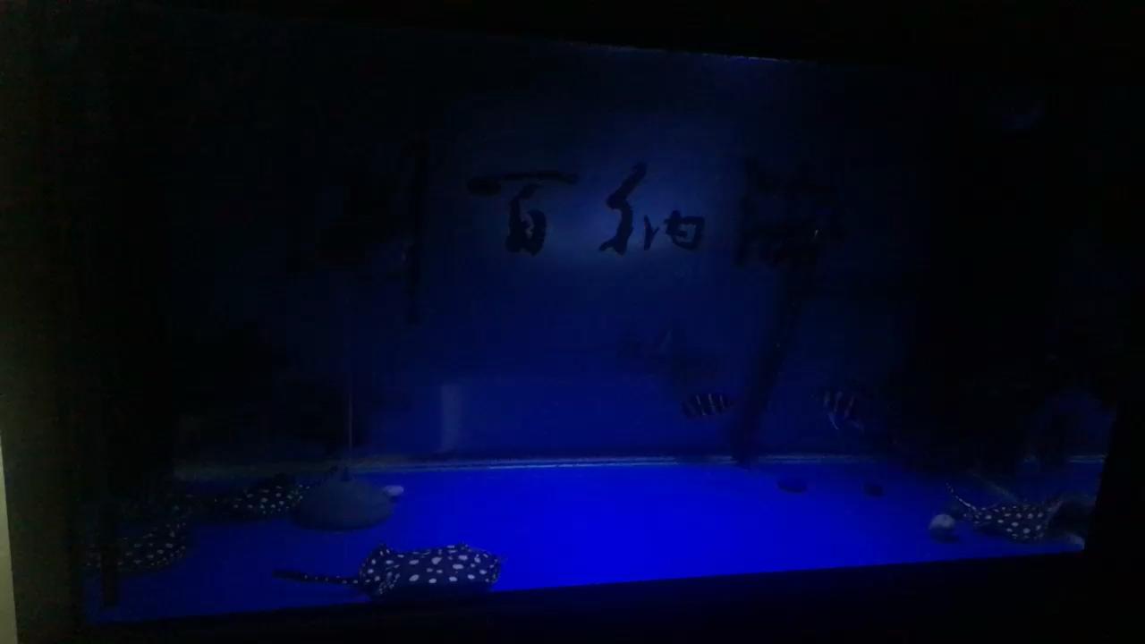 小夜灯享受享受 西安观赏鱼信息