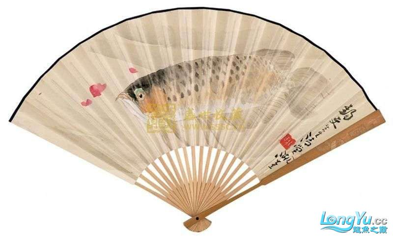 【西安泰虎】给予新手的 开缸三字经 (学习) 西安观赏鱼信息 西安博特第2张