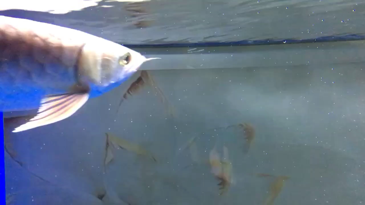水有很多小白点下点什么药水能好啊? 西安观赏鱼信息