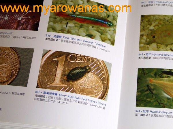 银鳞锦鲤你这么柔软的身躯你主人知道吗 西安观赏鱼信息 西安博特第2张