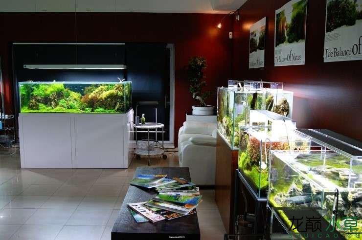 外国水草店的极致美景 西安观赏鱼信息 西安博特第1张