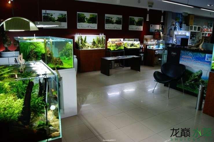 外国水草店的极致美景 西安观赏鱼信息 西安博特第2张