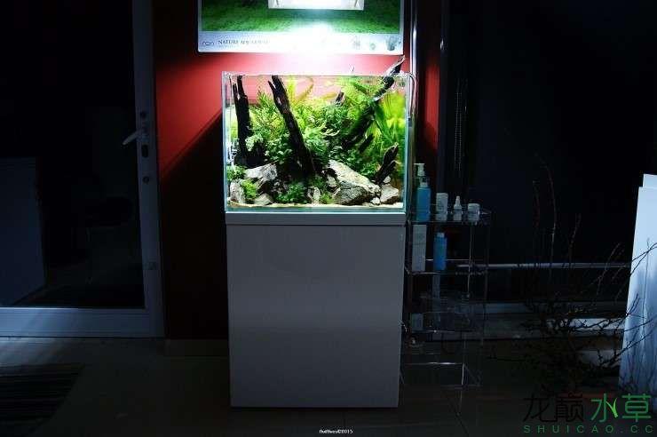 外国水草店的极致美景 西安观赏鱼信息 西安博特第5张