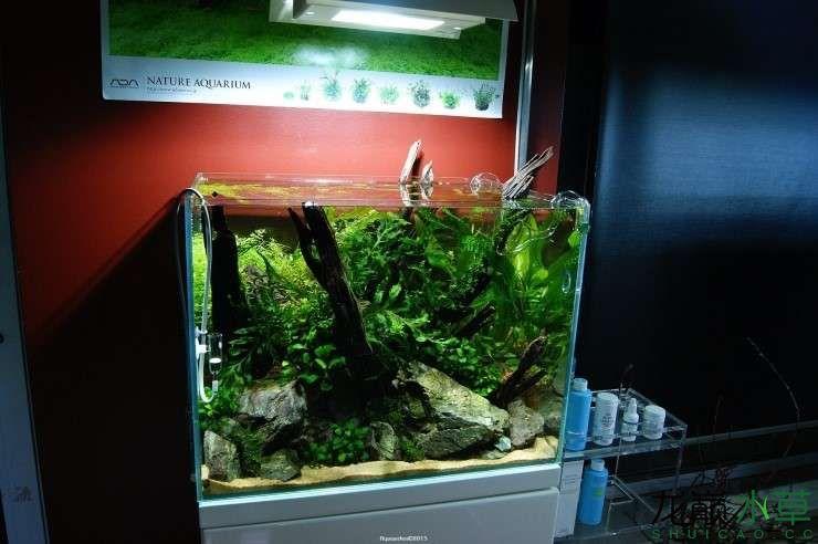 外国水草店的极致美景 西安观赏鱼信息 西安博特第4张