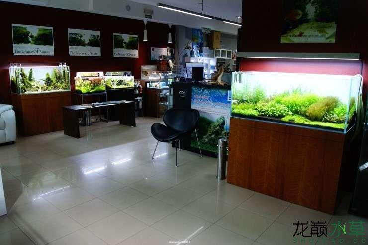 外国水草店的极致美景 西安观赏鱼信息 西安博特第6张