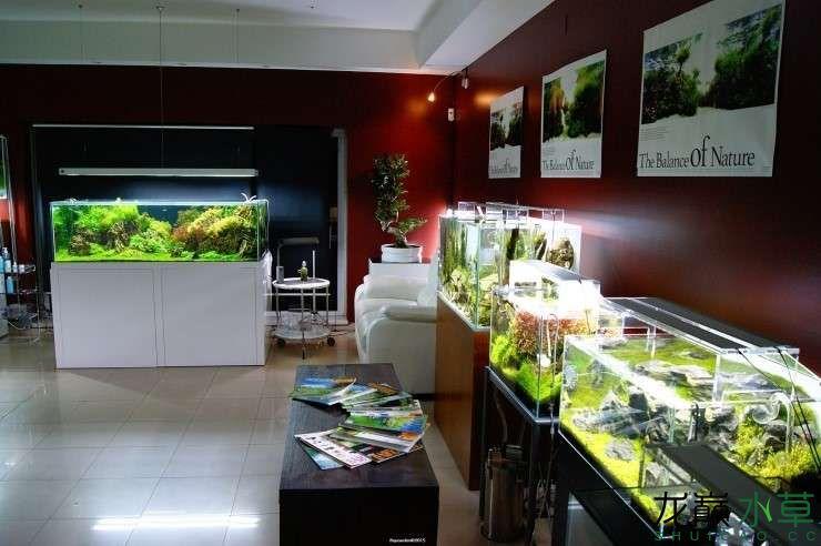 外国水草店的极致美景 西安观赏鱼信息 西安博特第7张