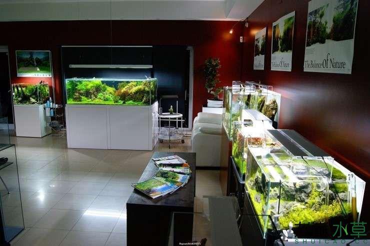 外国水草店的极致美景 西安观赏鱼信息 西安博特第9张
