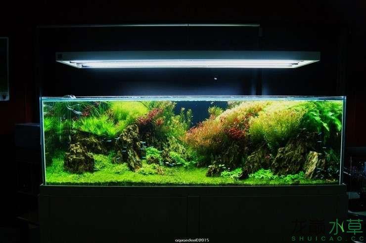 外国水草店的极致美景 西安观赏鱼信息 西安博特第8张