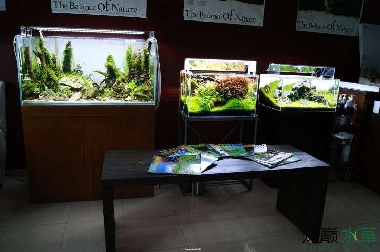 外国水草店的极致美景 西安观赏鱼信息 西安博特第10张