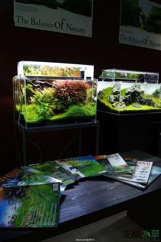 外国水草店的极致美景 西安观赏鱼信息 西安博特第11张