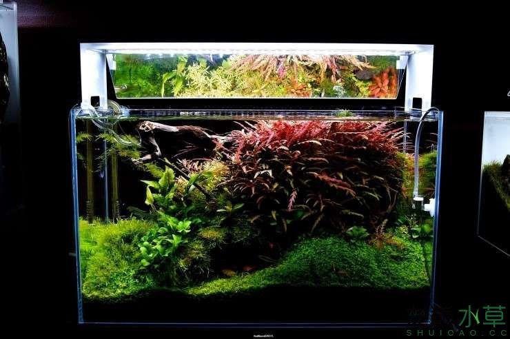 外国水草店的极致美景 西安观赏鱼信息 西安博特第13张