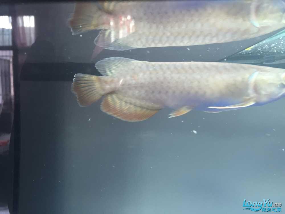 各位老板哥哥帮忙看下新手养鱼求老师 西安观赏鱼信息 西安博特第4张