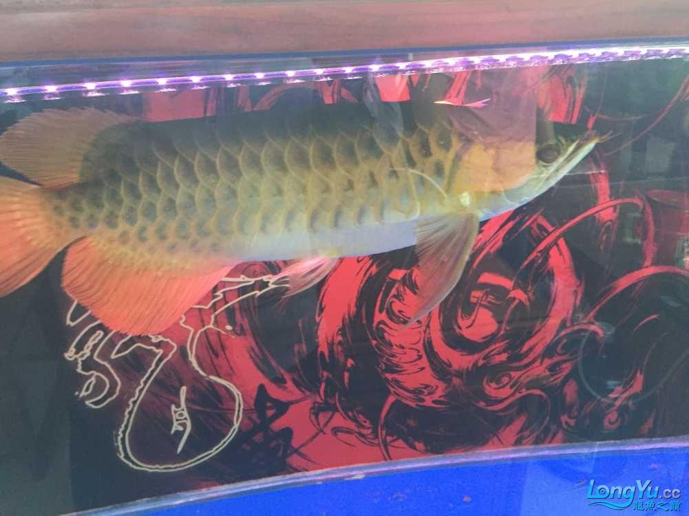 各位老板哥哥帮忙看下新手养鱼求老师 西安观赏鱼信息 西安博特第6张