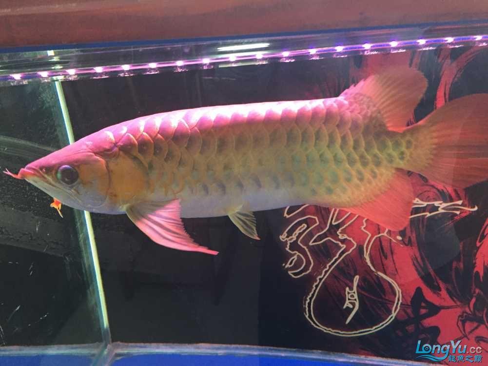 各位老板哥哥帮忙看下新手养鱼求老师 西安观赏鱼信息 西安博特第7张