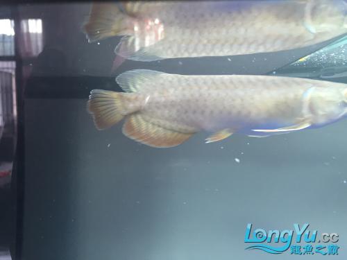 各位老板哥哥帮忙看下新手养鱼求老师 西安观赏鱼信息 西安博特第9张