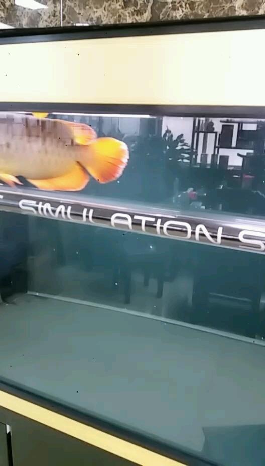 尾巴外寄定期检疫反而比以前多了 西安观赏鱼信息 西安博特第1张