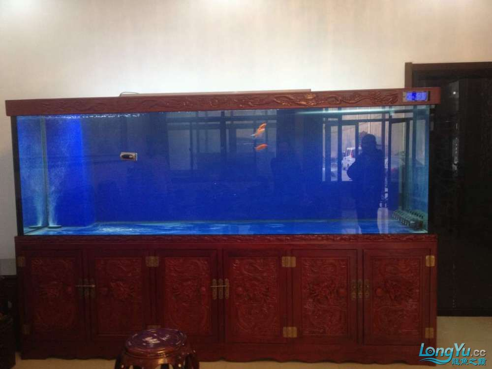 济南南部又一力作3米龙缸 西安观赏鱼信息 西安博特第1张