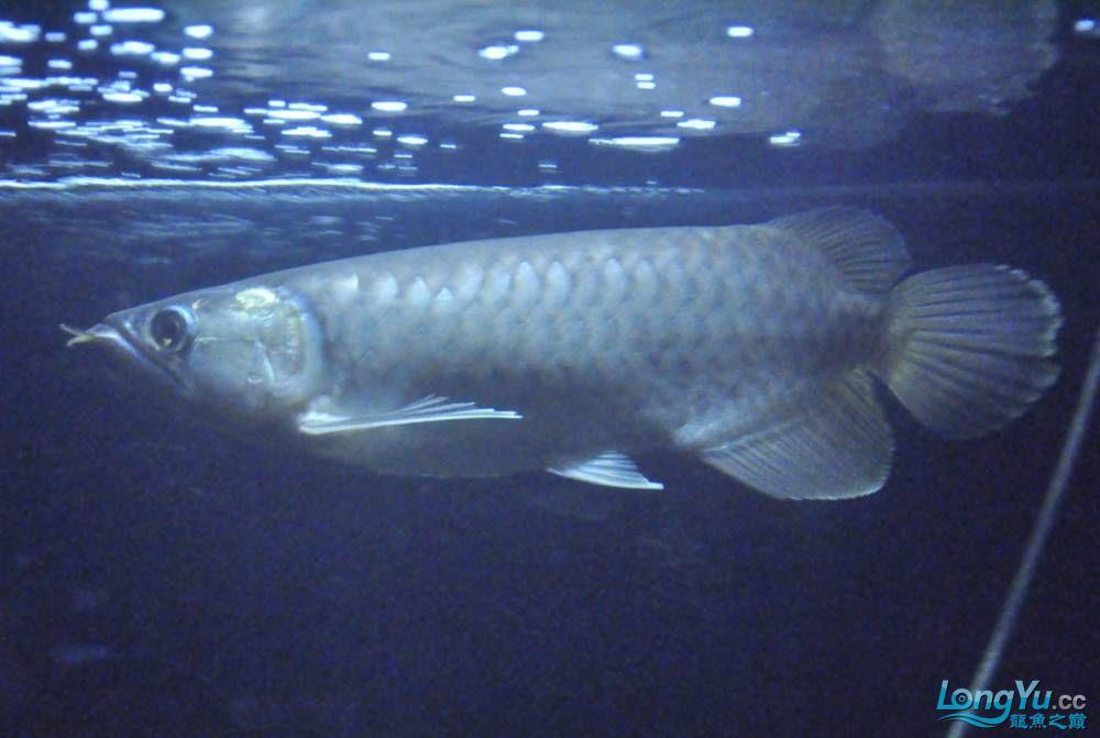 年底了·大家PP我的小青··嘎嘎··【西安鱼缸价格】 西安观赏鱼信息 西安博特第2张