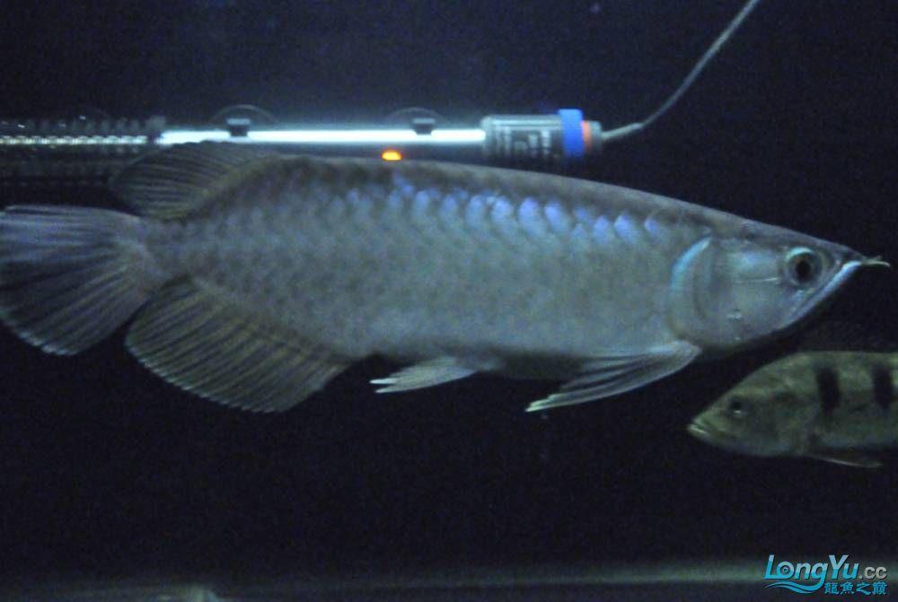 年底了·大家PP我的小青··嘎嘎··【西安鱼缸价格】 西安观赏鱼信息 西安博特第5张